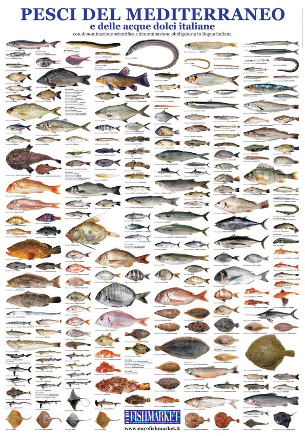 Eurofishmarket magazine books libri - Pesci comuni in tavola ...