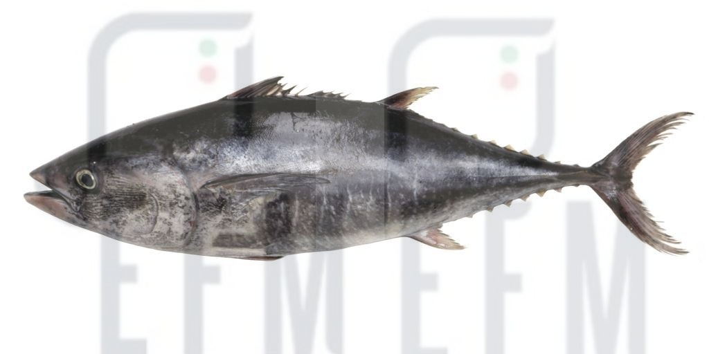Tonno rosso: campagna di pesca 2020