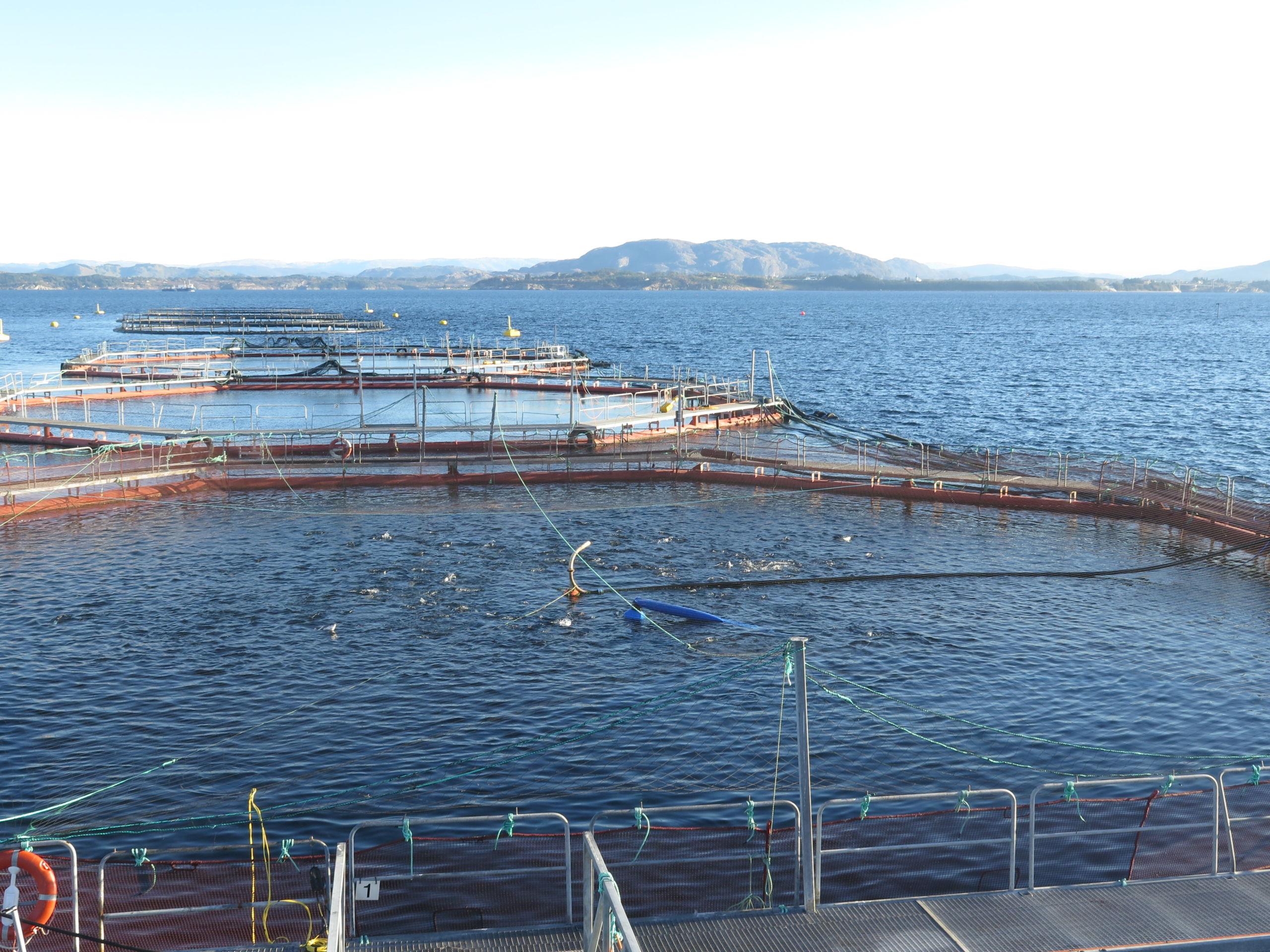 Richiesti chiarimenti sulla deroga dell' 853/2004 in merito al salmone norvegese e l'esenzione dal congelamento per il suo consumo da crudo.